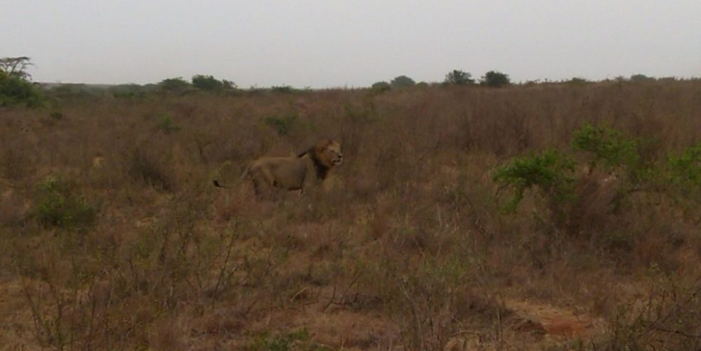 20170222 (21) Nairobi Park - Lions NJ
